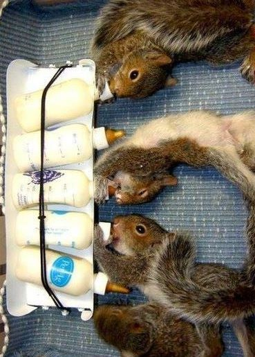 Squirrel bubs & bottles...