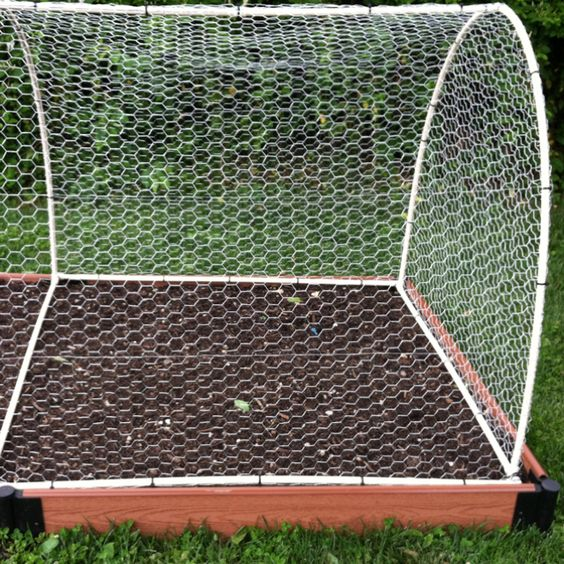 """My husband designed this cover to keep squirrels & rabbits out of our raised vegetable beds. It is made from 1/2"""" PVC pipe, PVC fittings & chicken wire."""