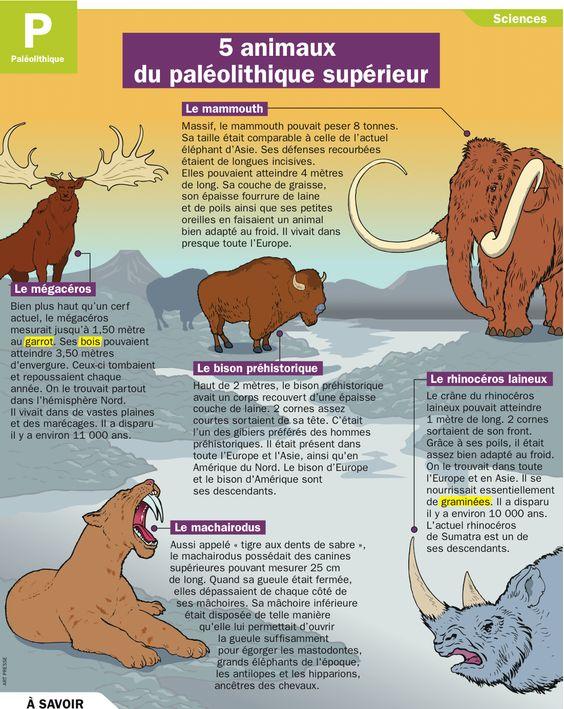 Fiche exposés : 5 animaux du paléolithique supérieur