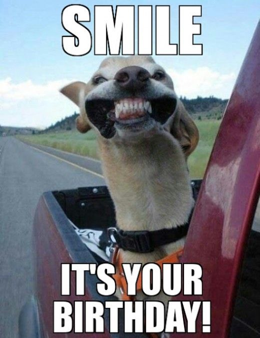 30 Hilarious Birthday Memes For Your Sister Sayingimages Com Cute Animals Happy Dogs Animals
