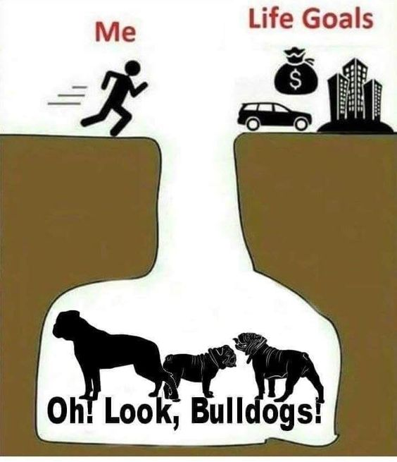 Pin By The Great British Bulldog On Bulldog Memes Bulldog Funny