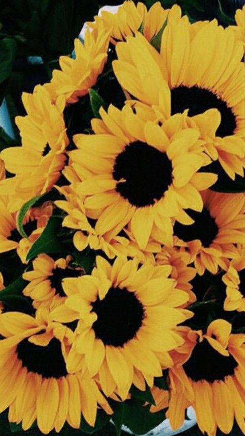 Pin By Anna Soberano On Wallpapers Sunflower Wallpaper Flower Wallpaper Cute Wallpapers