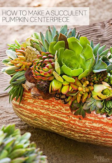 With simple glue, you can create a gorgeous, modern fall centerpiece or porch…: