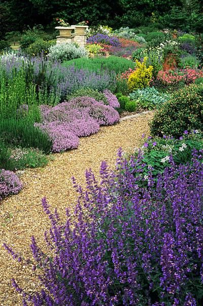 Garden with lavender thyme and drought resistant plants for Garden design ideas lavender