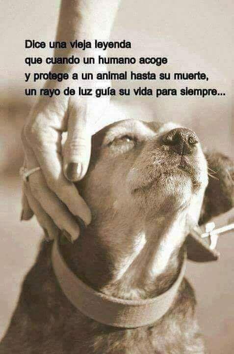 Cuenta La Leyenda Perros Frases Mascotas Frases Y Amor