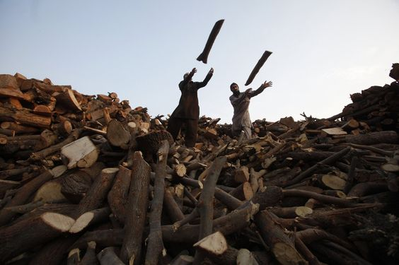 Mohsin Raza/Reuters SYNCHRONIZED: Men threw wood from a pile of logs into a supply truck at a timber warehouse in Lahore, Pakistan, Monday.