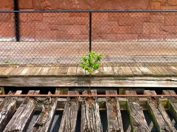 a tree is born on Amtrak tracks