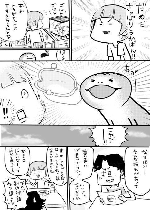 りくるーと riku rooootex さんの漫画 51作目 ツイコミ 仮 松本ひで吉 犬 猫 漫画 動物 漫画