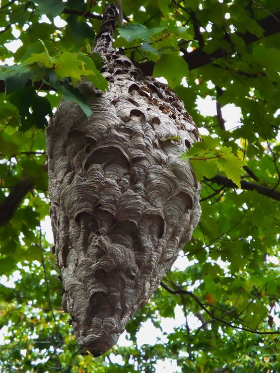 Hornet Nest 2015 - End
