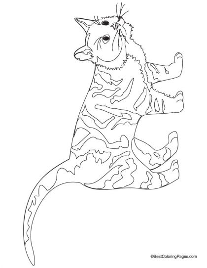 Cat coloring page Download Free