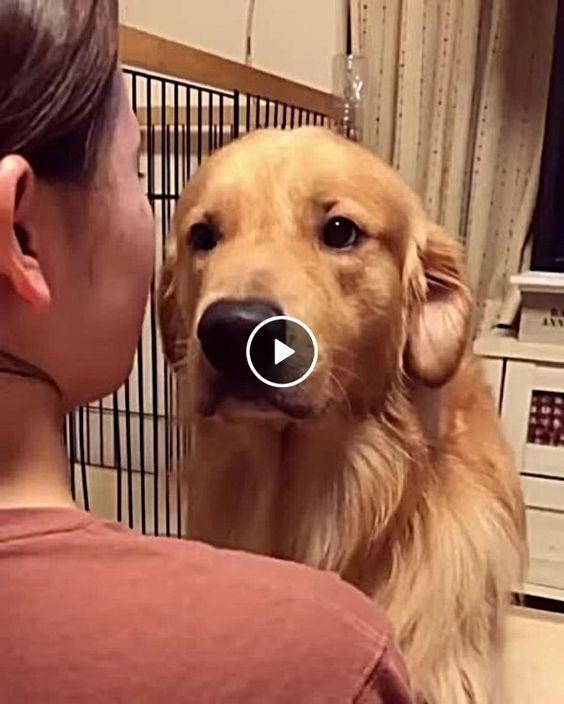 Cachorro fica confortado com abraço de dona.