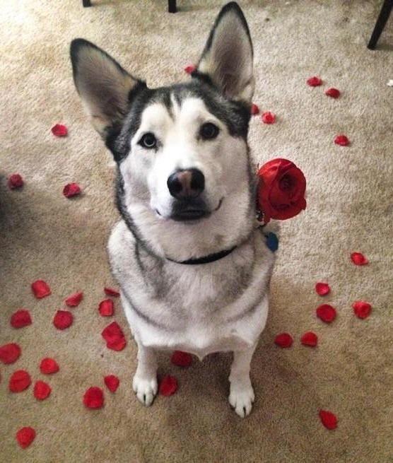 Mr Romantic Cute Animals Dog Love I Love Dogs
