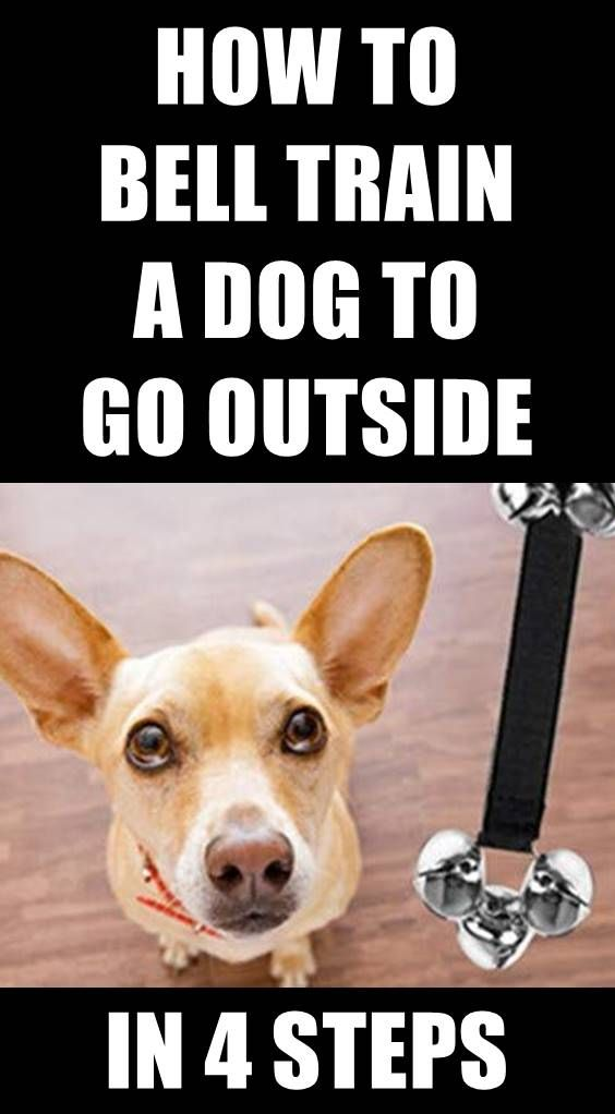 Teaching Your Dog To Ring A Bell To Go Outside Is A Lifesaver