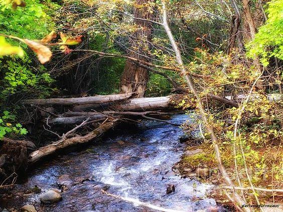 An inspirational landscape photography by JFantasma #creek #landscape  #coloradophotography