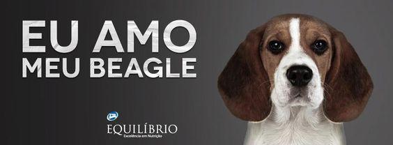 Nessas orelhas grandes e macias cabem os melhores cafunés <3  #Eu_Amo_Todas_as_Raças #Beagle #Cafuné