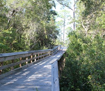 Many folks aren't aware of a great little trail to explore in Santa Rosa Beach. Located around the busy South Walton Government Annex buildings, the Creek Trail offers four miles of hiking and biking enjoyment. Easily accessible, one can meander through the trails and enjoy the beauty of South Walton's natural resources. One of the several bridges which provide a scenic overlook into the wetlands and ponds along the Creek Trail. Lori Ceier/Walton Outdoors