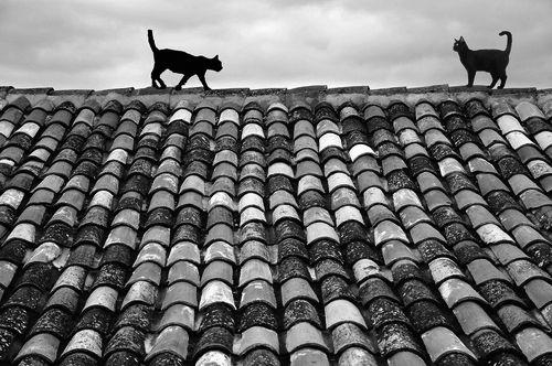 photo noir et blanc chats pinterest bonheur les et comment. Black Bedroom Furniture Sets. Home Design Ideas
