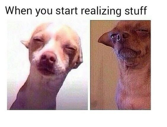20 Chihuahua Memes That Are Too Funny Not To Laugh At Chihuahua Funny Funny Dog Memes Funny Animal Jokes