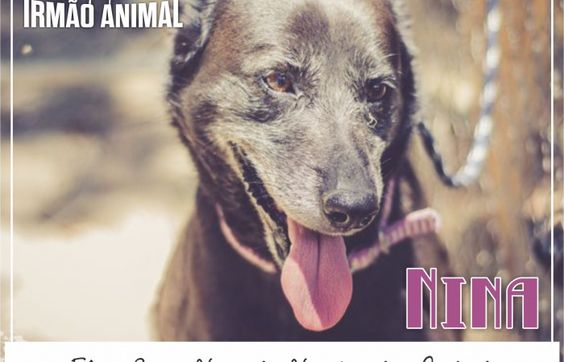 Blog Irmão Animal | Porque todos têm direito à vida