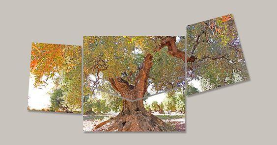 Un olivo de Barillas [09.2012]