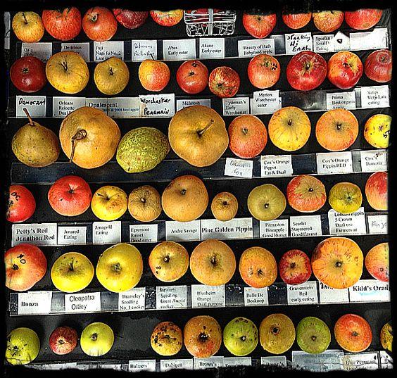 mountain nursery apples and nurseries on pinterest