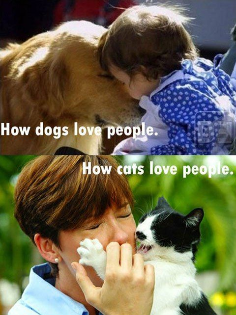 How Pets Express Their Love