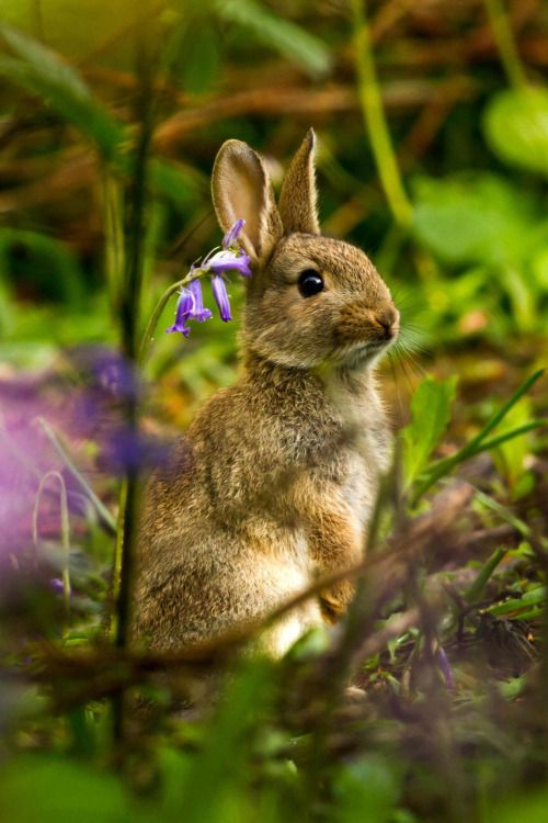 gentle-breeze:  Rabbit in the Bluebells (by Dulcie Mae)