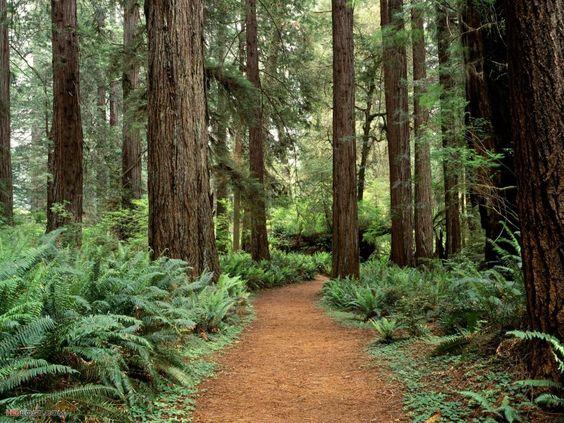 Photo Forest Olympic National Washington