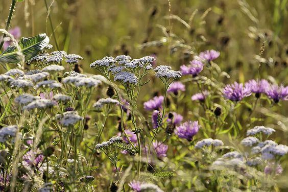 Tussocks wildflowers