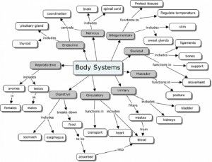 Printables Body Systems Worksheets body systems human and worksheets on pinterest diagram worksheets