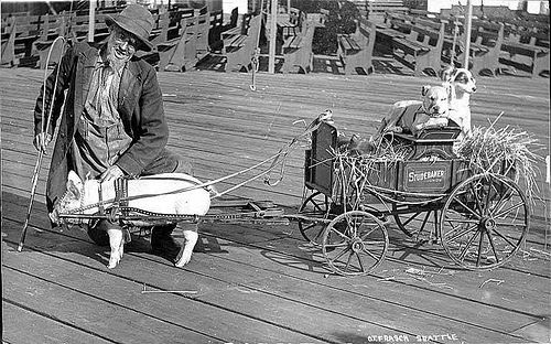 Pig in harness pulling a wagon, Luna Park, August 1909