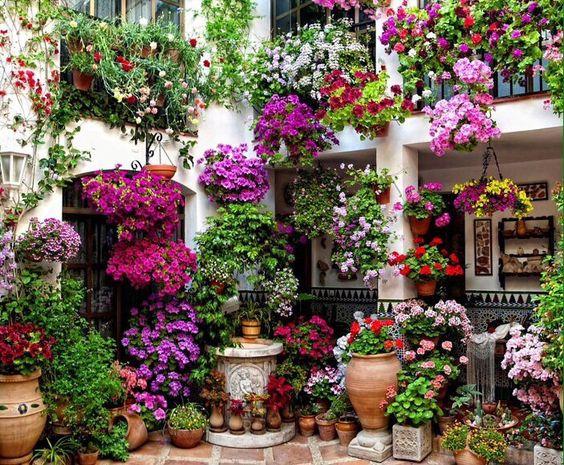 Flores en patio cordobés