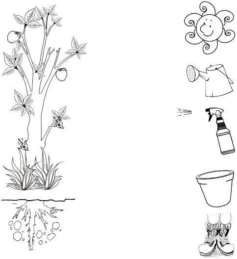 Germinacion De Las Plantas Para Colorear Imagui Con Imagenes