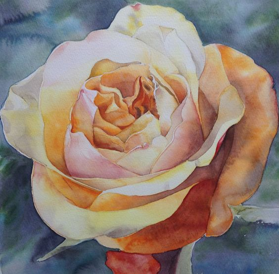 Blushing Rose… she's a shy sort, one glance and she'll flush gently… watercolour, 29 x 29cm. Available through Artists & Illustrators.