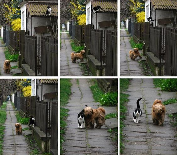 The story behind this picture is this:    Every day - at the same time - she waits for him...    He comes... and they go for a walk    Wouldn't it be great if we all had friends like this...no words needed...they just intuitively recognize the value of each other in their lives and act accordingly.