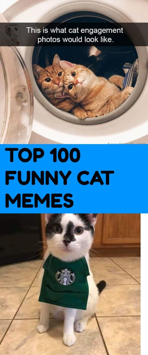 Dog Vs Cat Humors Humor Cats Are Cute And Sometimes Unintentionally Do Stupid Funny Things So We Have Collected Some T Funny Cat Memes Cat Memes Scary Funny