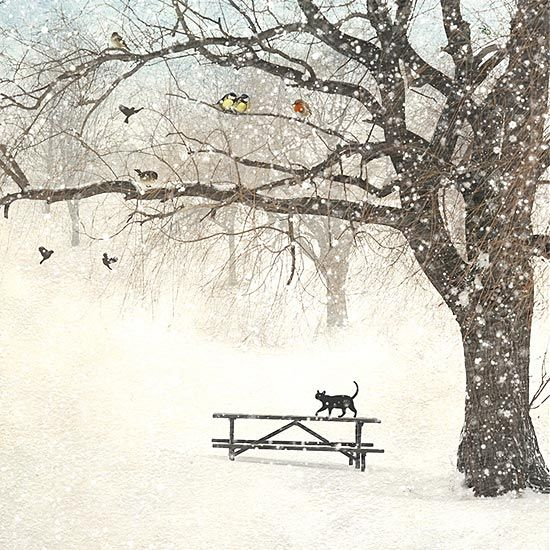 Cat Bench - christmas card design by Jane Crowther for Bug Art greeting cards.: