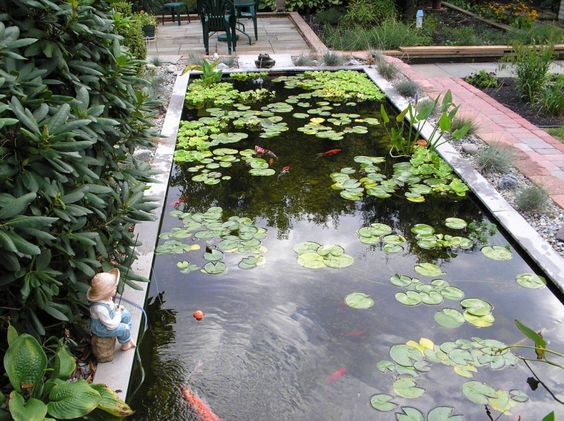 backyard big koi fish pond design ideas featuring rectangular fish pond with floating plant and