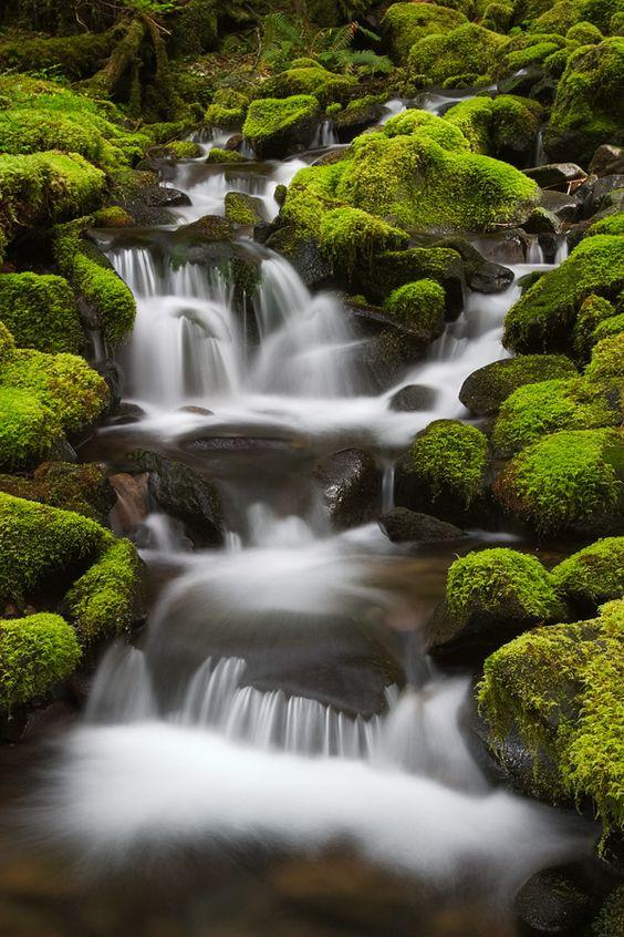 """Stream, Sol Duc Trail, Olympic National Park, Washington"" by David Bostock on 500px.com"