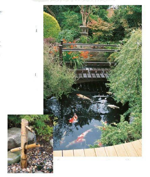 koi pond and pond plants