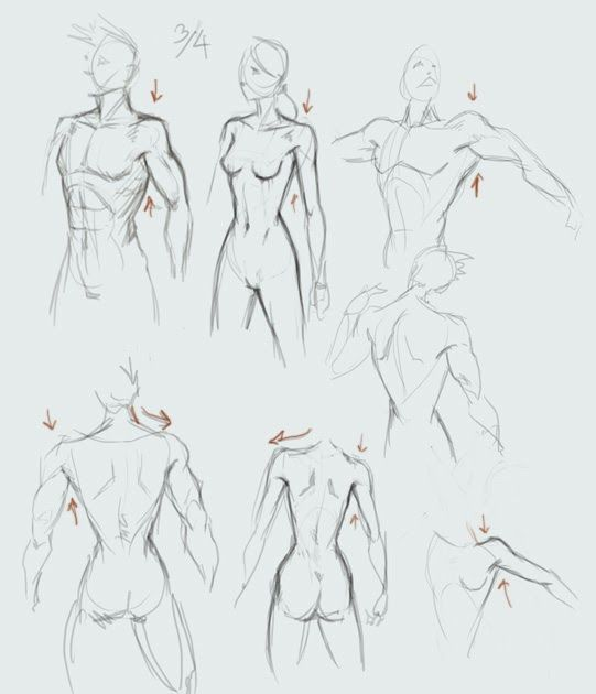 Drawing Torso With Shoulder And Arm Basic Male Man And Female Woman Upper Body 3 4 View And Back View Learn How Drawings Art Reference Poses Guy Drawing