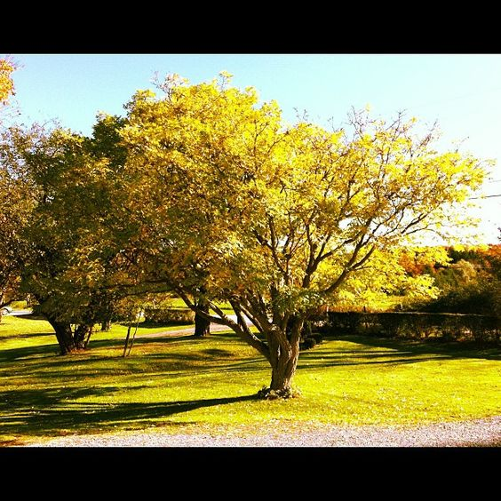 Fall | our front yard by JCBivins