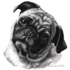 a cute drawing of a pug