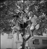 GREECE. 1948. Village girls perched in a tree. David Seymour