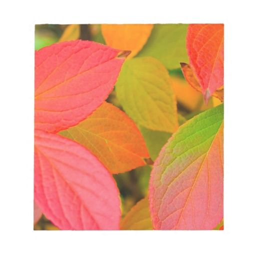 Leaves Autumn Colorful Nature Scratch Pads DealsOnline Secure Check out Quick and Easy...