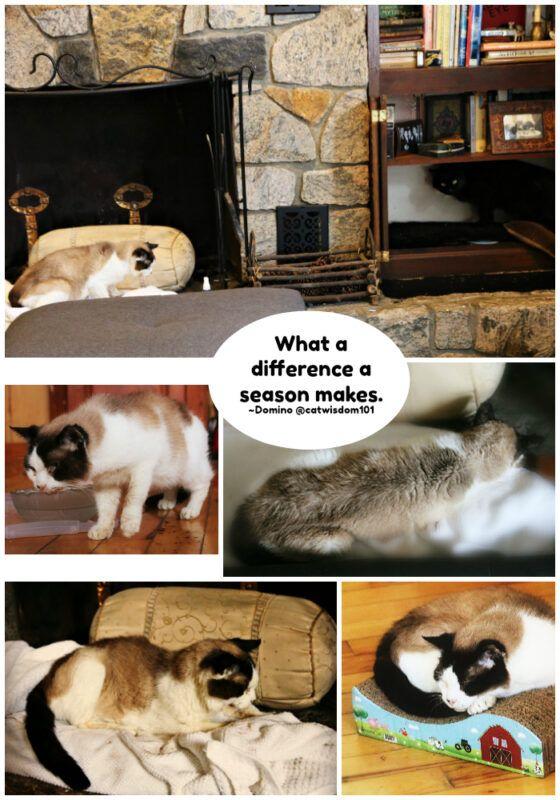 Cat Wisdom 101 Cat Care Clues To Hidden Illness Cat Care Puppy