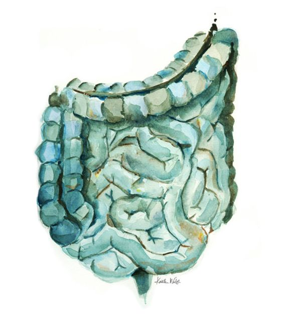 Large and Small Intestine Watercolor Print in Blue by LyonRoad: