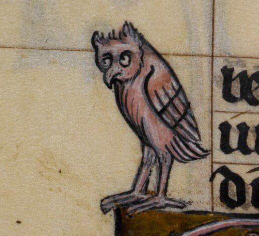 Озадаченная сова Perplexed  Stowe 17, 14th c.: