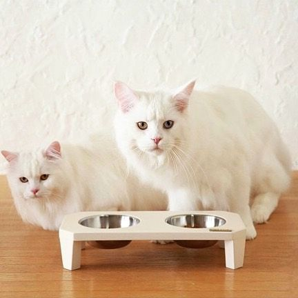 "Our stylish pet feeder ""Frizz"" comes in white and is suitable for cats and small dogs  (see link in bio) by petlifestyleshop"