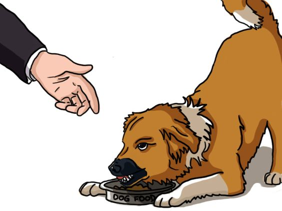 Dog Guarding Food Aggression - www.dogtrainingsos.com #dogtraining #dogs #dog #puppy #dogbehaviour #dogtrainingsos #dogart #dogaggression #dogfood #dogguarding #dogbite